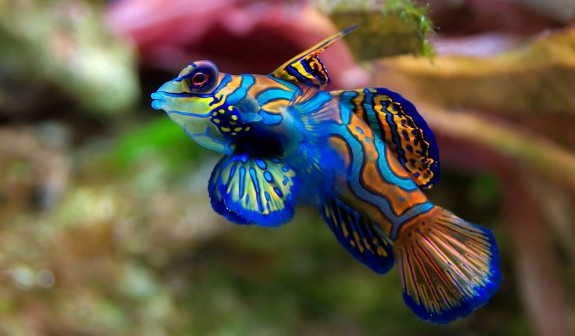 Colorful-Fish