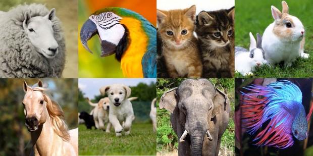 video onlin animals
